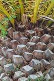 Stammar av palmträd på gatorna av Spanien fotografering för bildbyråer