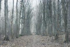 Stammar av träd utan sidor, bakgrund royaltyfri foto