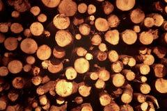 Stammar av trädsnittet royaltyfri fotografi