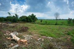 Stammar för träd för snickaresnitteukalyptus Arkivbilder