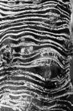 stammen av gömma i handflatan abstrakt svart white för designillustrationtextur Royaltyfri Foto