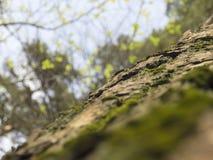 Stammen av trädet Royaltyfria Bilder