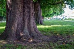Stammen för det kastanjebruna trädet i sommarträdgård parkerar arkivfoto