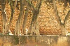 Stammen för träd för gatan för Brasilien Sao Paulo naturväxter rotar den gröna arkivfoto