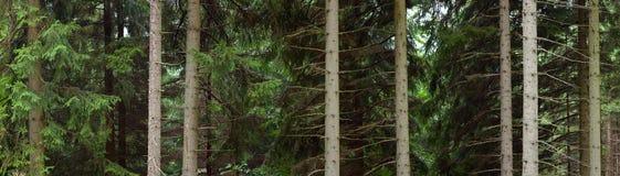 Stammen van bomen in bos Royalty-vrije Stock Foto's