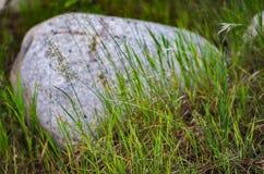 Stammen van gras met keien op de achtergrond in het bos Stock Foto