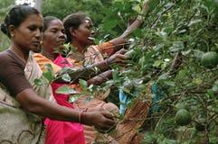Stammes- Frauenarbeiten lizenzfreie stockfotografie