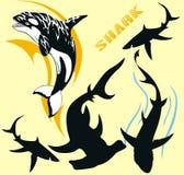 Stammes- Haifisch vektor abbildung
