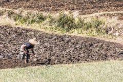 Stammes- Leute auf den Feldern Stockbilder