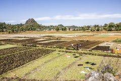 Stammes- Leute auf den Feldern Lizenzfreies Stockfoto