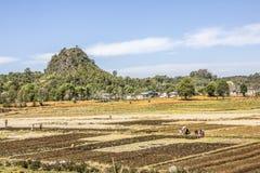 Stammes- Leute auf den Feldern Stockbild