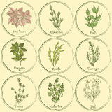 Stamp colored herbs set Stock Photography