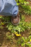 Stamp Out Weeds. Brown leather booted foot stamping on yellow dandelion weeds stock photos