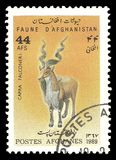 Fauna Markhor. Stamp printed by Afghanistan, Color edition devoted Fauna, shows Markhor Capra falconeri, CIRCA 1989 Stock Photos