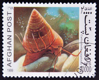 A stamp printed in Afghanistan shows Calliostoma z Royalty Free Stock Photos