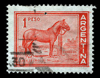 Stamp printed in Argentina with the image of the Caballo Criollo horse. Stamp printed in Argentina with the image of the Caballo Criollo breed which is the royalty free stock photography
