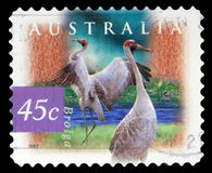 Stamp printed in the Australia shows Brolga, Grus Rubicunda, Wetland Bird. A stamp printed in the Australia shows Brolga, Grus Rubicunda, Wetland Bird, circa Stock Photos
