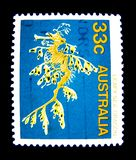 A stamp printed in Australia shows an image of leafy sea dragon on value at 33 cent. stock images