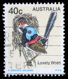 Stamp printed in Australia shows image of a Lovely Wren. Circa 1978 stock image