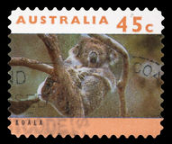 Stamp printed in Australia shows a Koala asleep in tree Royalty Free Stock Photography