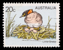 Stamp printed in Australia shows the Little Grebe or Dabchick on the nest. Stamp printed in Australia shows the Little Grebe or Dabchick - Tachybaptus ruficollis royalty free stock photography