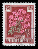 Stamp printed by Austria, shows Alpen Rose. Rhododendron hirsutum, circa 1948 royalty free stock photos