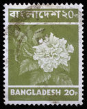 Stamp printed in Bangladesh shows flower Stock Images