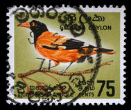 Stamp printed in Ceylon shows Black-hooded Oriole Royalty Free Stock Photos