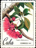 Stamp printed in Cuba shows image of Eugenia Malaccencis, malay apple, circa 1967 Stock Photography