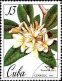 Stamp printed in Cuba shows image of a Plumieria alba, circa 1967 Royalty Free Stock Images