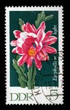 Stamp printed in GDR shows Epiphyllum, Flowering Cactus Plant Stock Photo