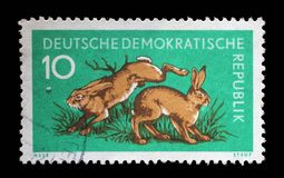 Stamp printed in GDR shows Hares, Lepus Timidus. A stamp printed in GDR shows Hares, Lepus Timidus, Animal, circa 1959 Stock Photo