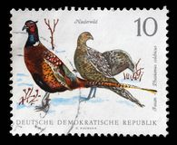 Stamp printed in GDR shows Pheasant, Phasiaus colchicus. A stamp printed in GDR shows Pheasant, Phasiaus colchicus, Bird issue, circa 1968 Stock Images