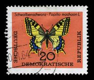 Stamp printed in GDR shows Schwalbenschwanz Papilio machaon L butterfly Stock Images