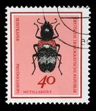 Stamp printed in Germany from the Useful Beetles issue shows Clerus mutillarius Royalty Free Stock Image