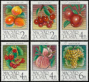Stamp printed by Hungary shows Apricots Royalty Free Stock Photos