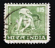 A stamp printed in the India shows Woman plucking tea, circa 1965 Royalty Free Stock Photos