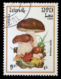 Stamp printed in Laos shows mushroom Royalty Free Stock Photography