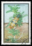 Bug Fischer Caterpillar Hunter. Stamp printed by Mongolia, Color edition dedicated to Bugs, shows Fischer Caterpillar Hunter, CIRCA 1972 stock photos
