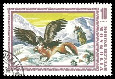 Golden Eagle and Red Fox. Stamp printed by Mongolia, Color edition dedicated to Hunting, shows Golden Eagle and Red Fox , CIRCA 1975 Royalty Free Stock Photography