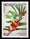 Stamp printed in Nicaragua shows Anigozanthos manglesii stock photos