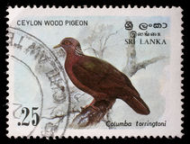 Stamp printed in the Republic of Sri Lanka shows the Ceylon wood pigeon Stock Photo