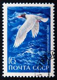 A stamp printed in Russia shows Black-headed gull, series animals, circa 1972 Stock Image