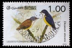 Stamp printed in Sri Lanka shows Legges flowerpecker bird Stock Image