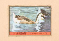 UNITED ARAB EMIRATES - CIRCA 1972: A stamp printed in the United Arab Emirates shows a bird, circa 1972. A stamp printed in the United Arab Emirates shows a bird royalty free stock images