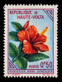 Stamp printed in Upper Volta shows Hibiscus. A stamp printed in Upper Volta shows Hibiscus rosa sinensis, circa 1963 Royalty Free Stock Image