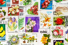 Stamp printed in USSR shows flower Stock Photos
