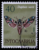 Stamp printed in Yugoslavia shows butterfly. With the inscription `Daphnis nerii` from the series `Butterflies`, circa 1964 Stock Image