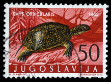 Stamp printed in Yugoslavia shows the European pond turtle Stock Photos