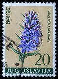 Stamp printed in Yugoslavia shows hyssop. Series, circa 1961 stock image